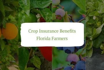 Crop Insurance Benefits Florida Farmers